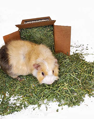 High Desert Alfalfa Hay - Dried Natural Alfalfa Hay for Rabbits, Guinea Pigs, Chinchillas, and...